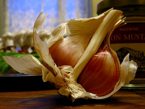 Growing garlic - hardneck or softneck