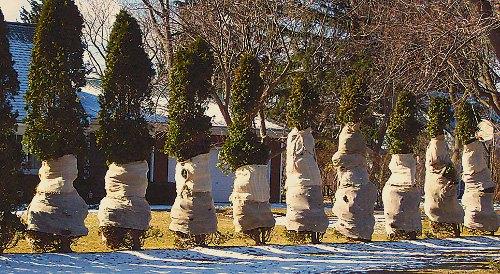 Árboles envueltos en invierno