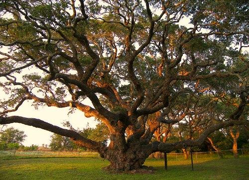 fertilización de raíces profundas para árboles