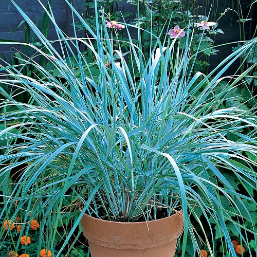 Invasive Plants You Should NOT Buy
