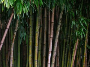 Ejecutando Bamboo