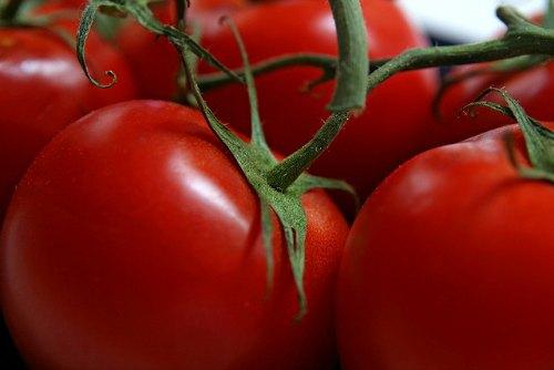 Cultivo de tomates, si quitas las hojas inferiores.