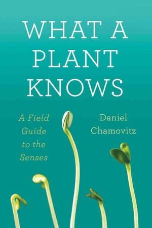 que sabe una planta