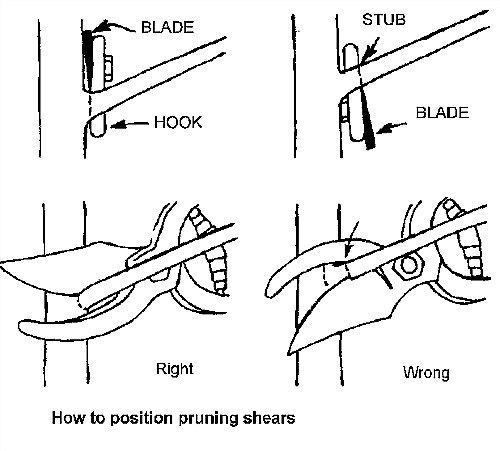 proper way to hold pruning shears