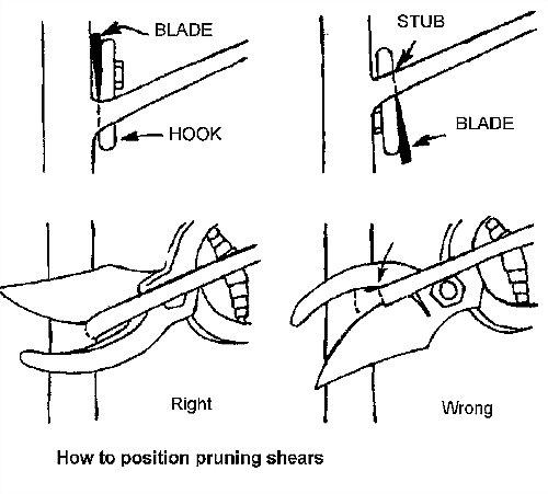 forma adecuada de sujetar las tijeras de podar
