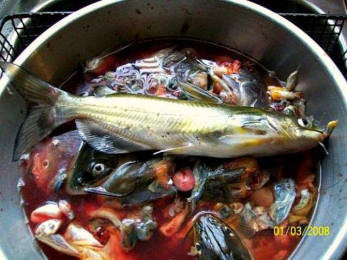 hacer fertilizante para peces