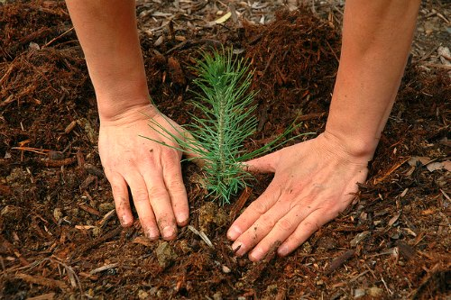 Charmant Best Time To Plant Trees