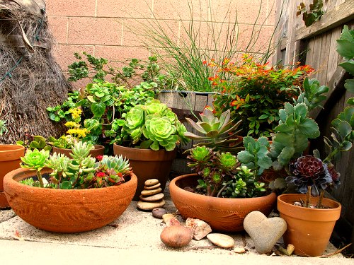 Container gardening selecting the right fertilizers fertilizing potted plants workwithnaturefo