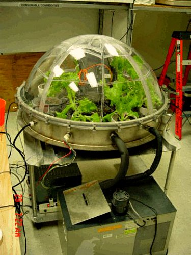 A Garden Myth Is Born - Plants Don't Purify Air on army study, sally ride study, facebook study,