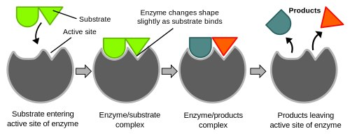 compost enzymes