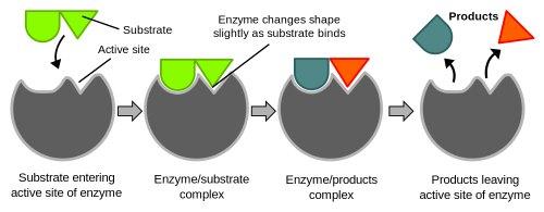 enzimas de compostaje