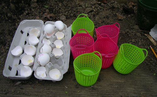 Eggshells - Do They Decompose In The Garden 1