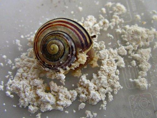 Slugs and Diatomaceous Earth 1