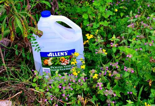 Homemade Weed Killer Vinegar 12