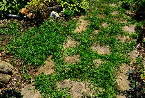 Vinegar Weed Killer Myth Revisited - Garden Myths
