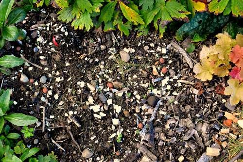 Cáscaras de huevo: se rompen en el jardín 7