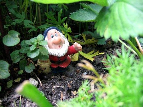 Un verdadero jardinero orgánico, jardinería orgánica
