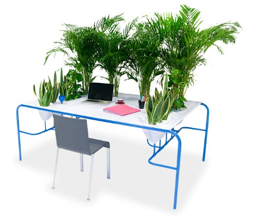 Plants cleaning the air in an office, desk designed by Julio Radesca