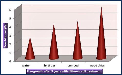 Efecto de fertilizantes y mantillo en el crecimiento de árboles, por Garden Myths (basado en la referencia 1)