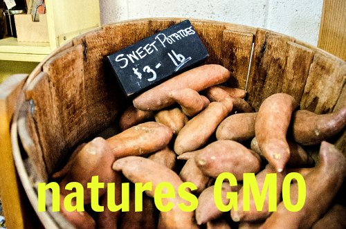 GMO Myths - Understand the Truth About GMO Plants - Garden Myths