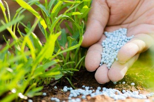 Salts Don't Kill Plants