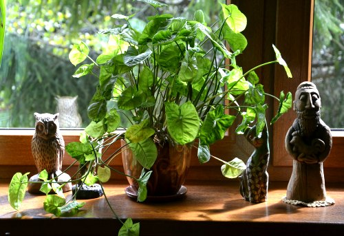 Las plantas domésticas no aumentan los niveles de oxígeno en el hogar.