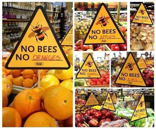 Are honey bees dying?