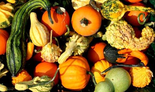 Los pepinos, calabazas, melones y sandías no deben cultivarse cerca unos de otros.