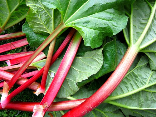 Image result for rhubarb toxicity