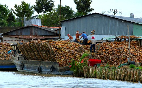 Shipping coconut husks to a coir processing plant in Vietnam