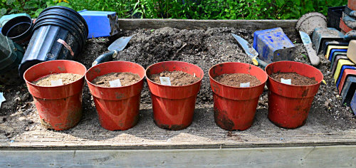 Does Peat Moss Acidify Soil Garden Myths