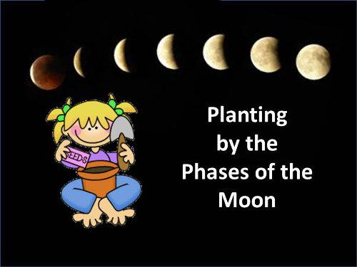 Plantar en las fases lunares
