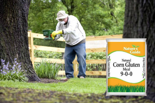 lawn and corn gluten meal