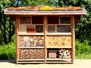 Bee Hotels Do They Really Work Garden Myths