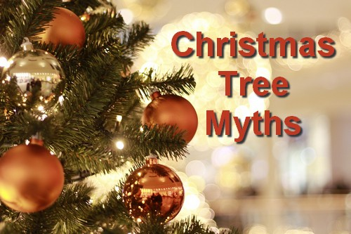 22 Christmas Tree Myths