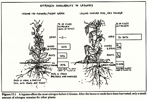 nitrógeno en legumbres