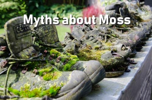 Mitos de musgo que todo jardinero debería conocer