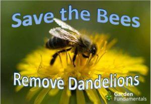 ¿Son los dientes de león realmente importantes para las abejas?