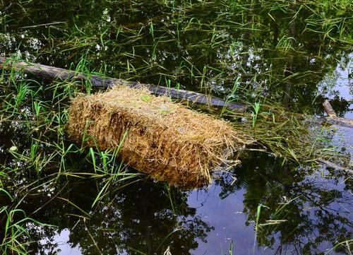 ¿La paja de cebada evita que las algas crezcan en los estanques?