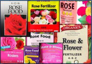 ¿Qué fertilizante de rosas tiene el NPK correcto?
