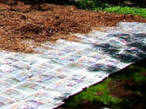 Mulching Leaf (jardinería de lasaña), crédito de la foto The Real Dirt Blog