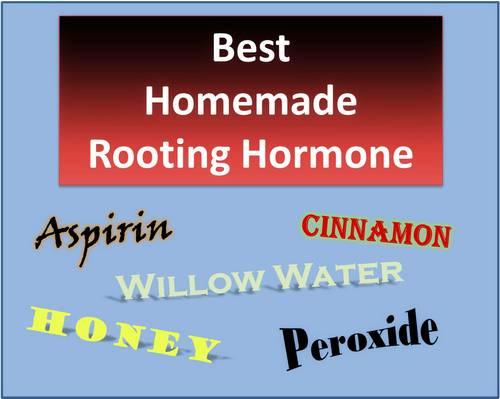 Las mejores hormonas de enraizamiento: ¿funcionan las hormonas de enraizamiento caseras?