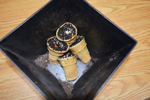 Cultivo de semillas en conos de helado - 24 horas