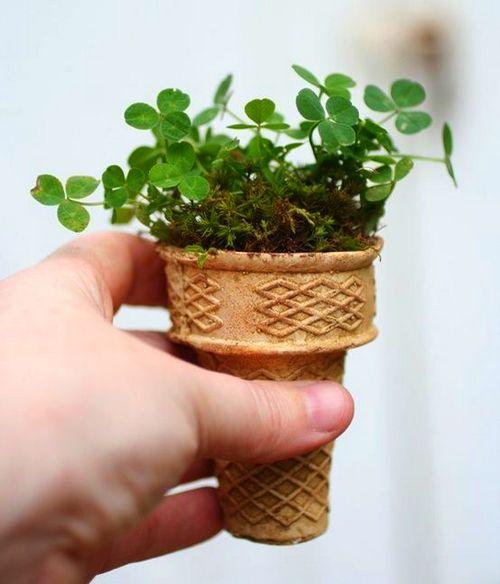 Cultivar semillas en conos de helado: ¿gran idea o máxima estupidez?