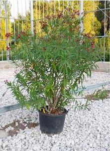 Uno de los árboles utilizados para la prueba.