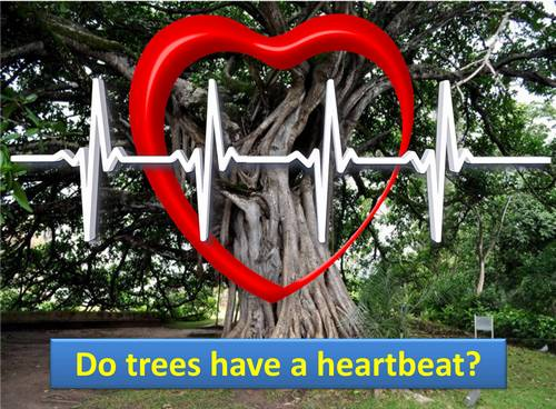 ¿Tienen los árboles un latido del corazón?  - Nace un mito