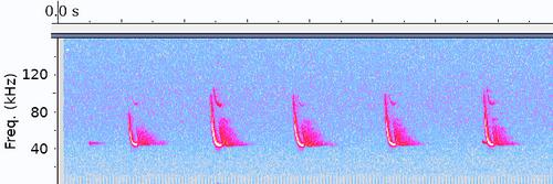 Bat Echogram, imagen de Drahkrub