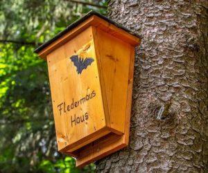 Casa de murciélagos