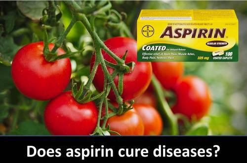 Spray de aspirina para tomates y huerta