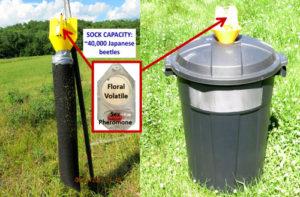 Trampas japonesas para escarabajos modificadas con bolsas / contenedores más grandes, fuente de la foto: Universidad de Missouri